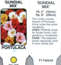 Portulaca, Mixed
