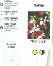 "Salvia \'Hot Lips\' or \'Cathedral\' 4.5"" Pot"