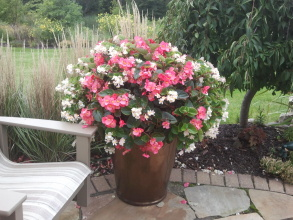 Custom planting in your pots or ours.