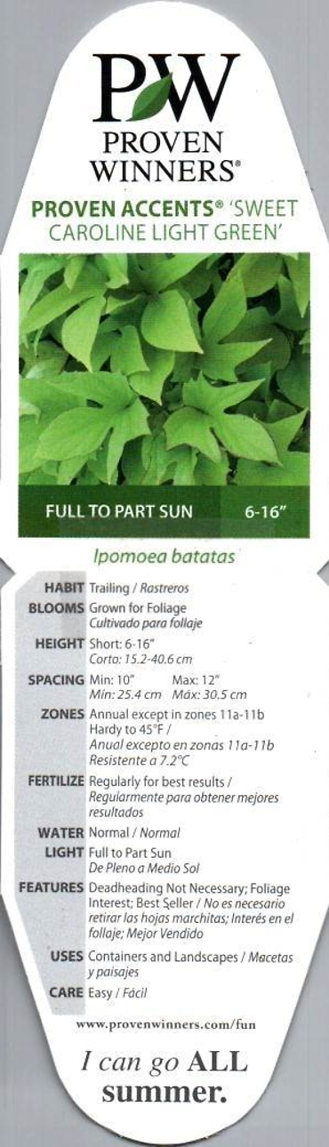 "Potato Vine 4"" Pot"