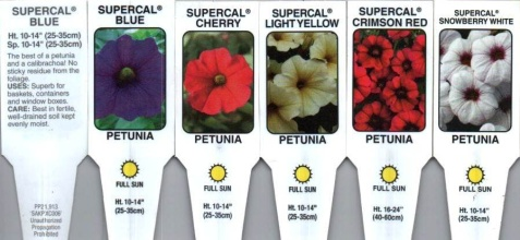 "Petchoa \'Supercal\' 4.5"" Pot"