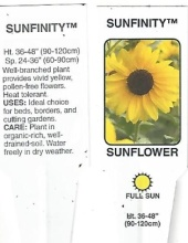 Sunflower \'Sunfinity\' 1 Gallon Pot
