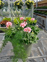 Geranium Patio Pot 16""
