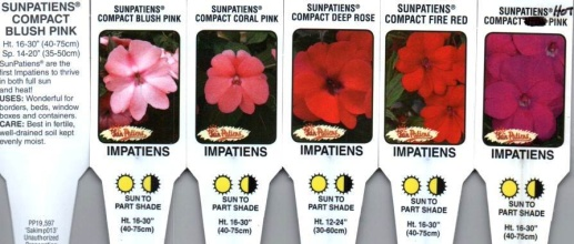 "Impatiens, Hybrid \'Sunpatiens\' 4.5"" Pot or 10\"" Hanging Basket"