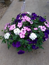 "Combination 12"" Premium Hanging Basket"