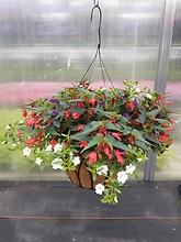 "Combination 16"" Premium Wire Hanging Basket"