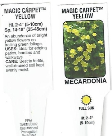 "Mecardonia \'Magic Carpet\' 4.5"" Pot"