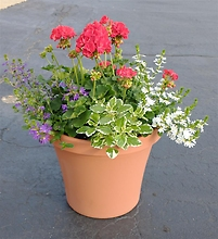 Patio Pot with Premium Annuals