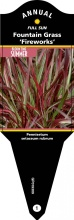 Grass, Annual 1 Gallon Pot
