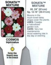 Cosmos, Mixed